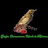 Gruppo Orientamento Uccelli da Richiamo - Forlì